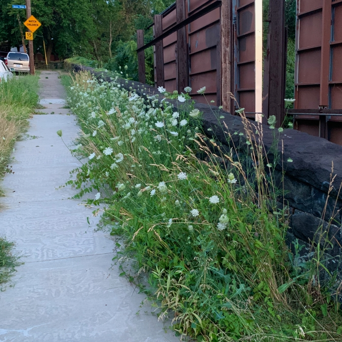 sidewalk past Queen Anne's Lace flowers, dark stone retaining wall, and rusty backs of billboards