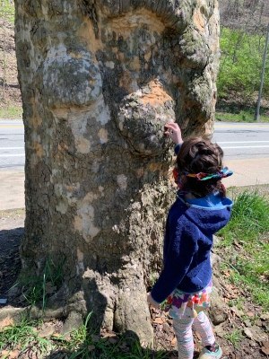 a colorfully-dressed child wearing a cloth mask tied behind her head, peeling dry bark from a very peely, knobby sycamore tree