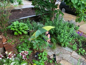 a small, urban garden in which various plants surround a stone path, on which a large green umbrella is set up over a huddled child; everything is wet with rain